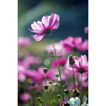 fotobehang veldbloemen roze