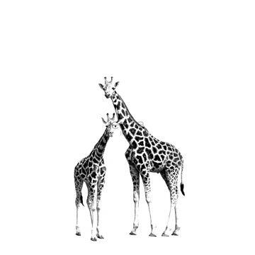 fotobehang giraffen zwart en wit
