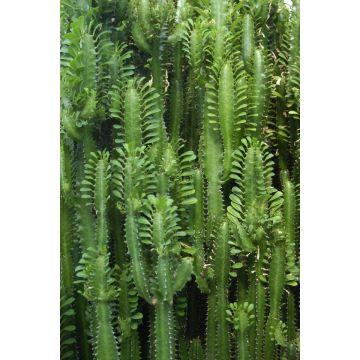fotobehang tropische jungle cactus wand tropisch junglegroen