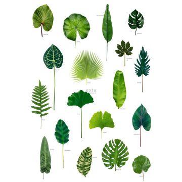 fotobehang tropische jungle bladeren tropisch junglegroen