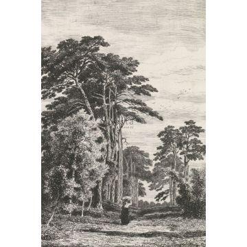 fotobehang bosrijk landschap zwart wit