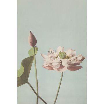 fotobehang lotusbloem oudroze