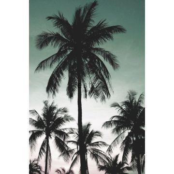 fotobehang palmbomen petrolgroen