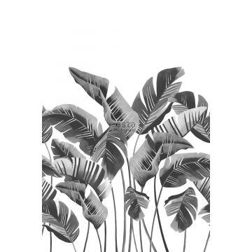 fotobehang grote bananenbladeren zwart wit