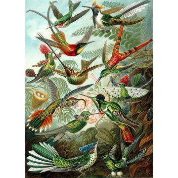 fotobehang vogels tropisch junglegroen