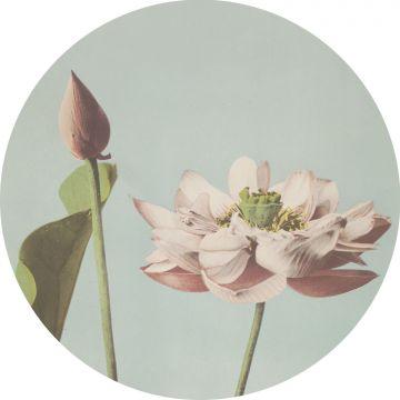 zelfklevende behangcirkel lotusbloem zacht roze en vergrijsd blauw