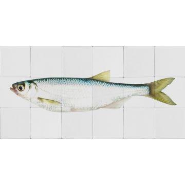 muursticker vis geel en blauw