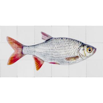 muursticker vis grijs en rood