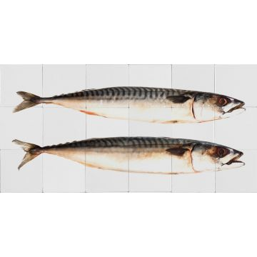 muursticker vissen grijs