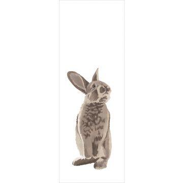 fotobehang konijn bruin